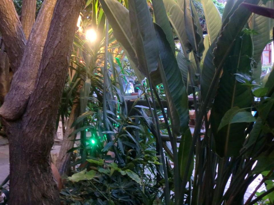 Idylle im Garten Anik Hotel