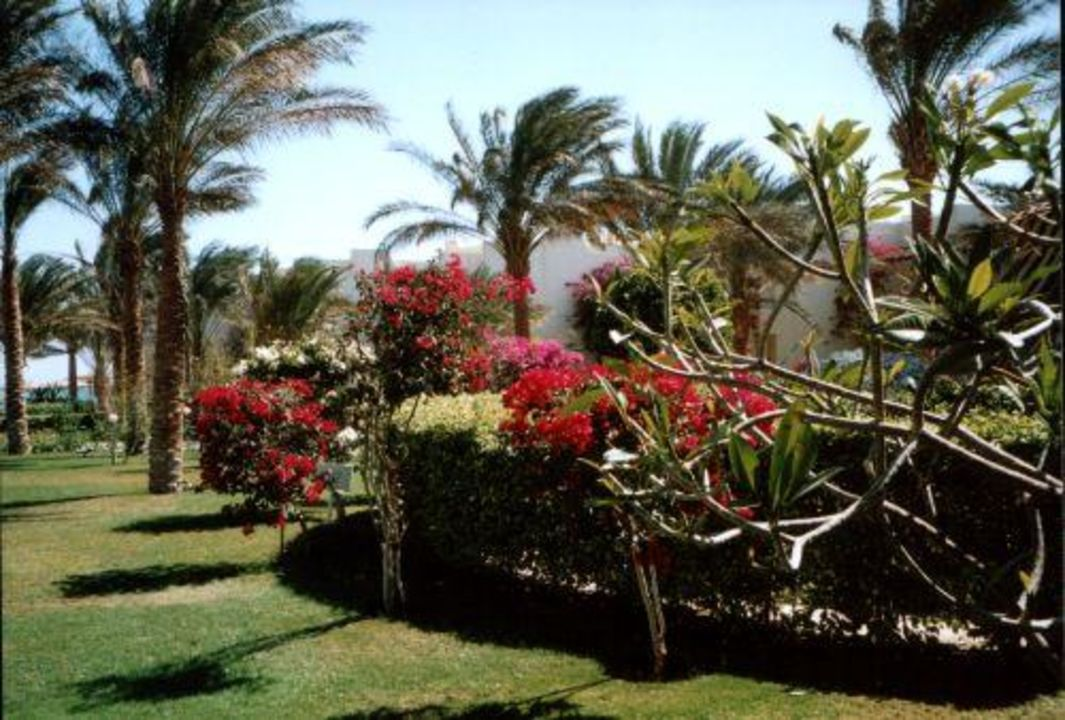 Hotelgarten Palm Beach Hurghada 2004 Hotel Palm Beach Resort