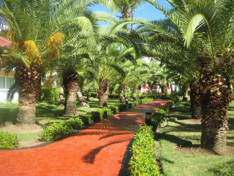 Einer von viele Wegen Grand Palladium Bávaro Suites Resort & Spa