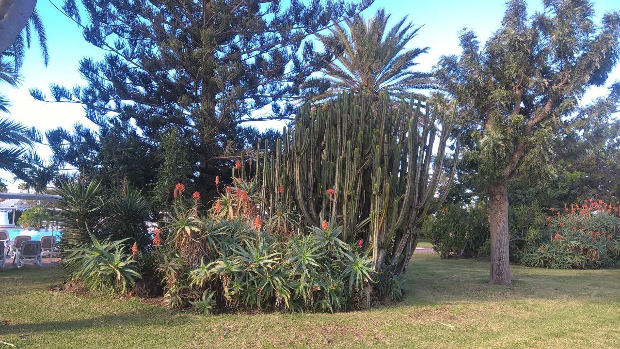 Gartenanlage Bungalows Cordial Sandy Golf