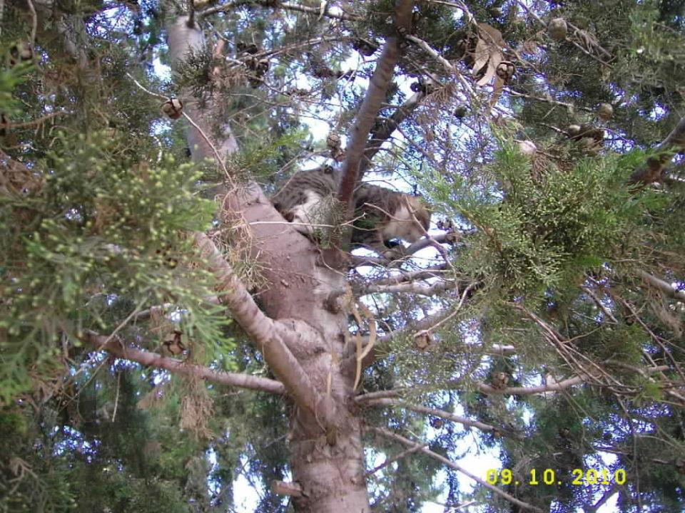 Die Katze auf dem Baum! Green Max Hotel
