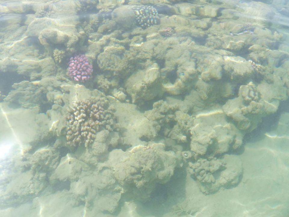 Korallenriff Fort Arabesque Resort Spa & Villas