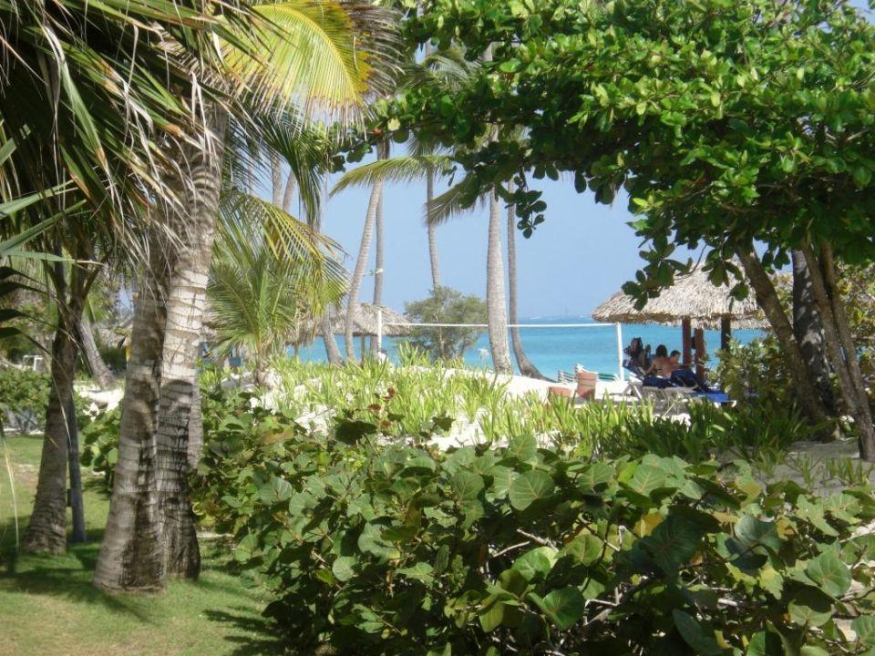 Blick auf den Strand Hotel Grand Palladium Palace Resort, Spa & Casino