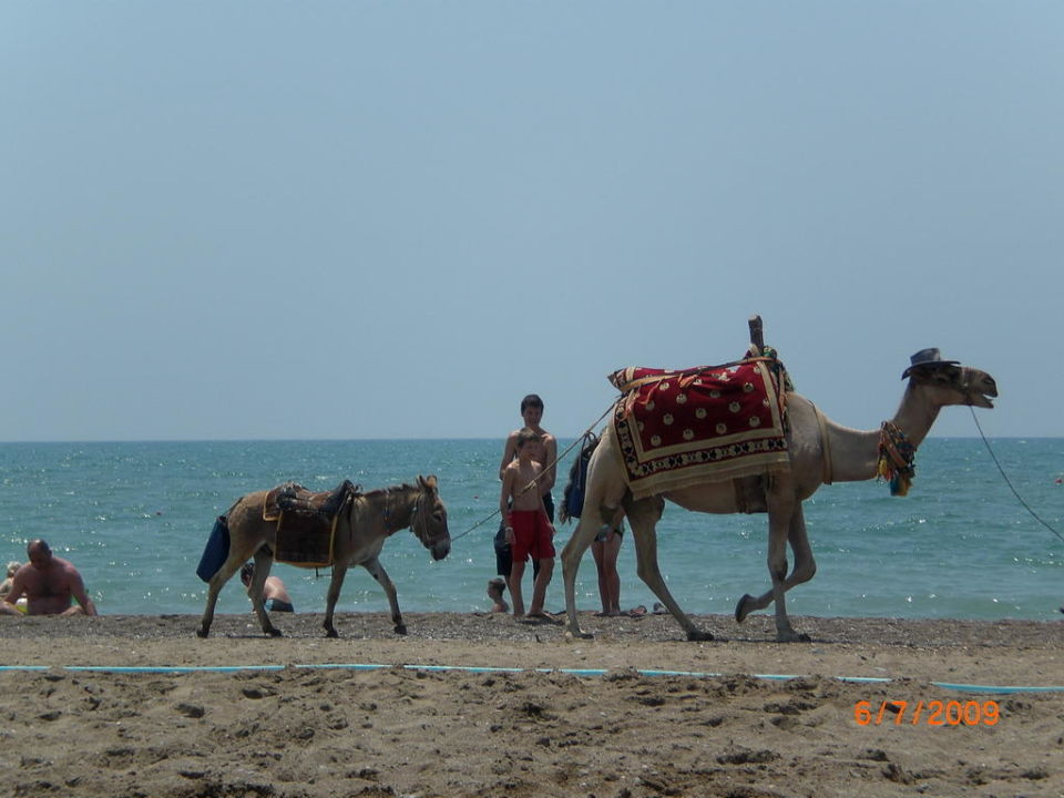 Hotelstrand Fe Beach/Febeach