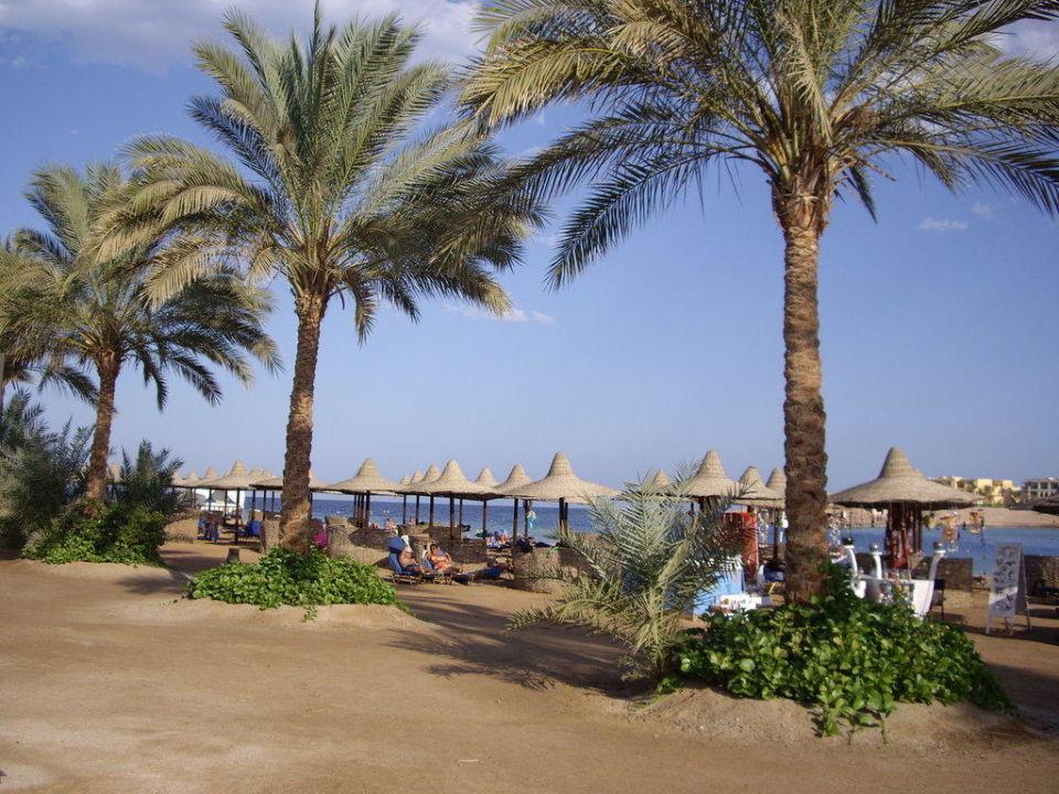 Beach Steigenberger Coraya Beach