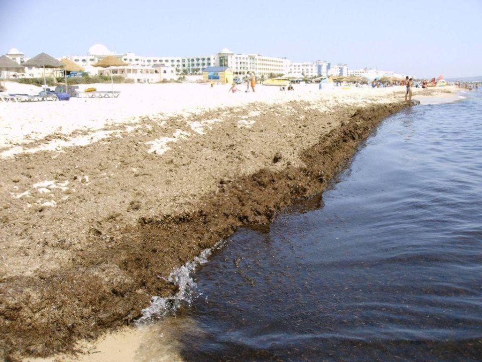 Strand und Meer voll mit Seegras Iberostar Averroes