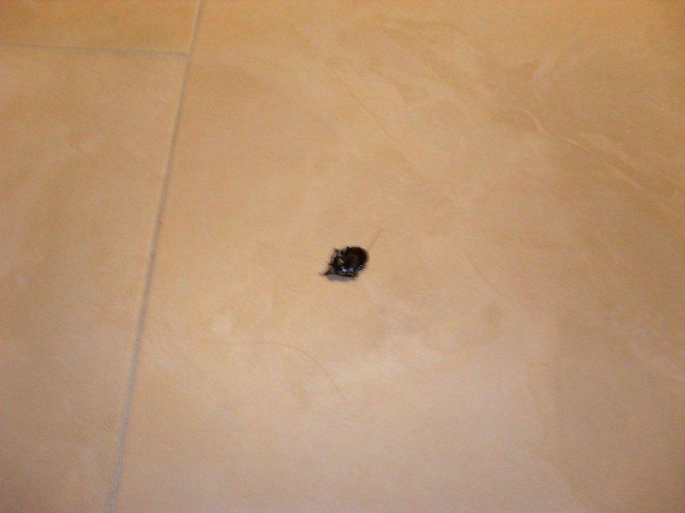Insekten im Zimmer Mar Hotels Ferrera Blanca