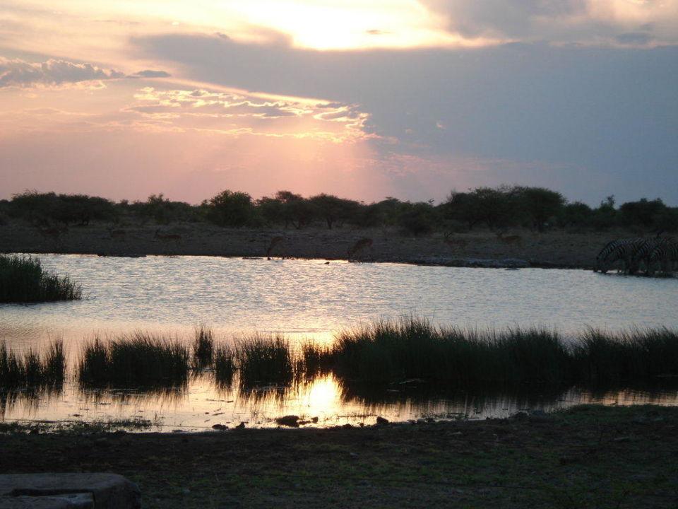 Wasserloch Namutoni Namutoni Camp