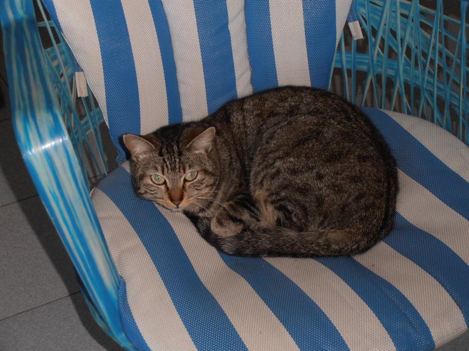 Susi, unser täglicher Terrassengast  Hotel Bungalows Laura
