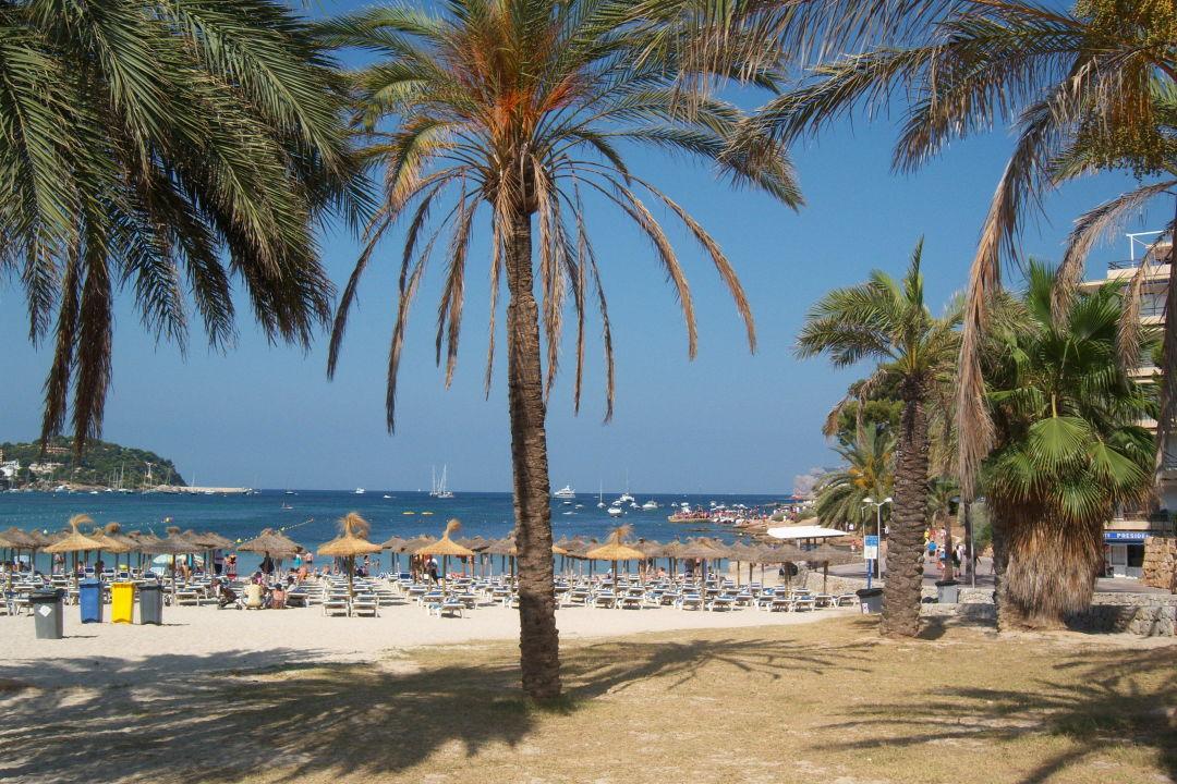 Blick zum strand in santa ponsa hotel globales playa for Aparthotel d or jardin de playa santa ponsa