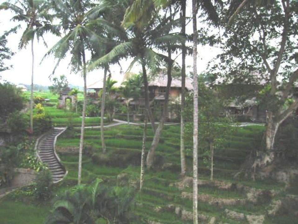 Kamandalu Resort Ubud Kamandalu Ubud