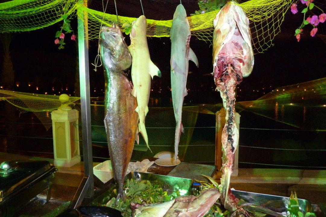Fische am Abendbuffet Albatros Palace Resort