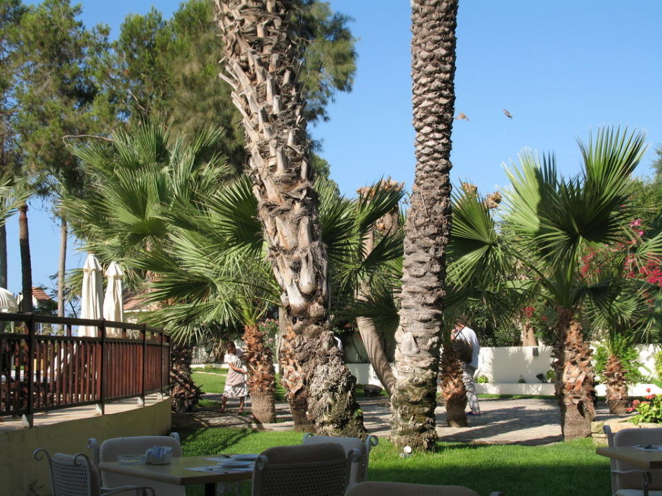 Garten Elias Beach Hotel