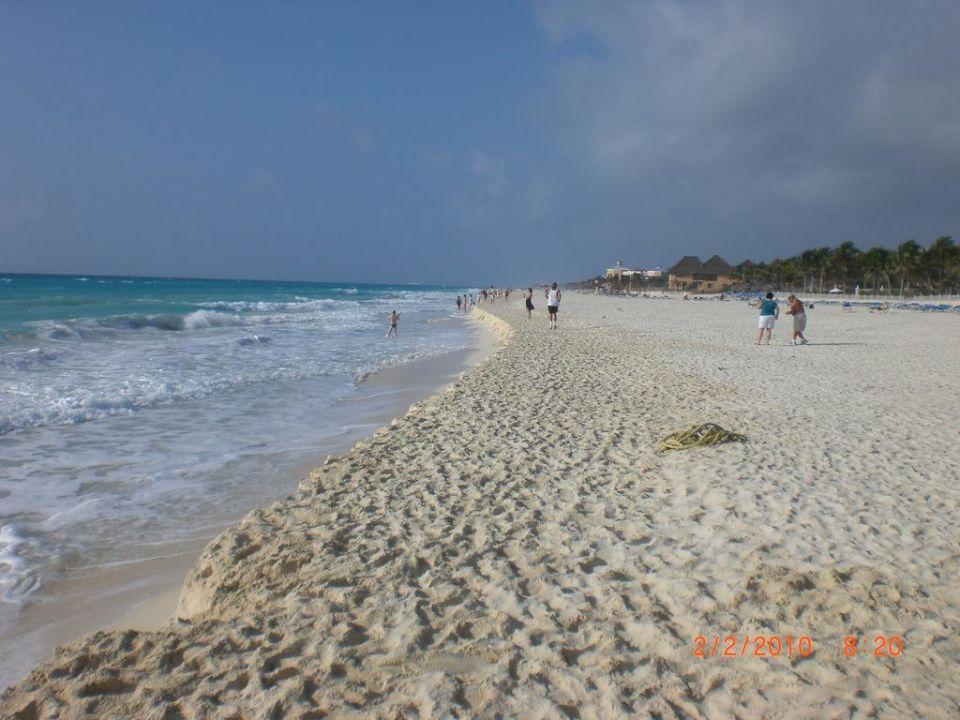 Strand The Reef Playacar