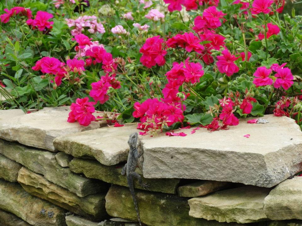 Image Result For Zen Garden
