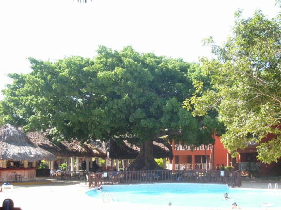 Bar BelleVue Dominican Bay