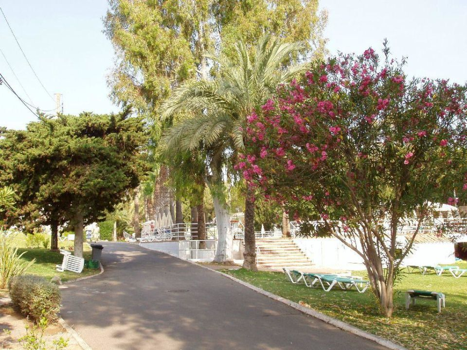 Blick zum Pool Club Hotel Tropicana Mallorca