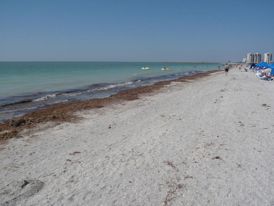 Seegras Hotel Sheraton Sand Key Resort