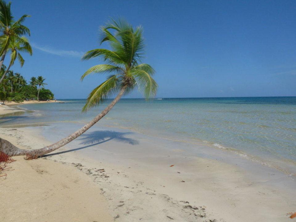 Palme am Hotel-Strand Grand Bahia Principe El Portillo