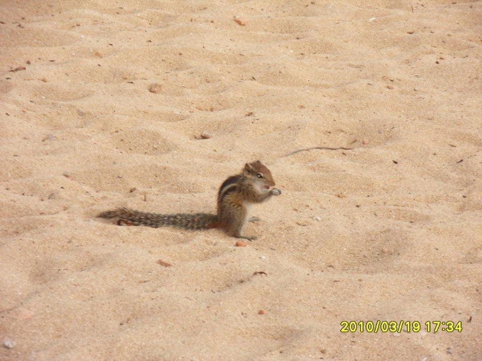 Streifenhörnchen im Garten Hotel Emerald Bay  (geschlossen)