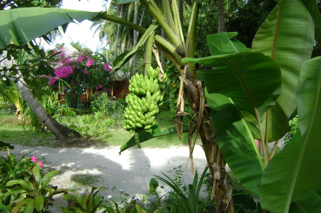 Kokos Kuramathi Maldives