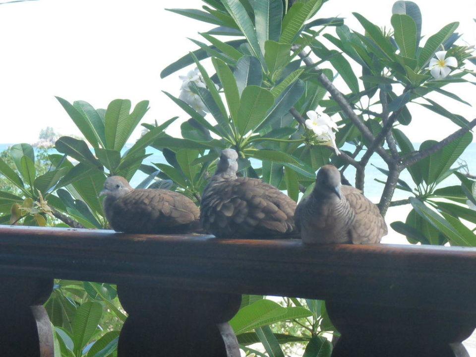 Unsere täglichen Gäste L'Hirondelle Self Catering Guest House