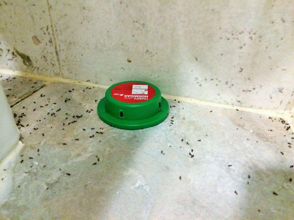 Tote Ameisen im Badezimmer\