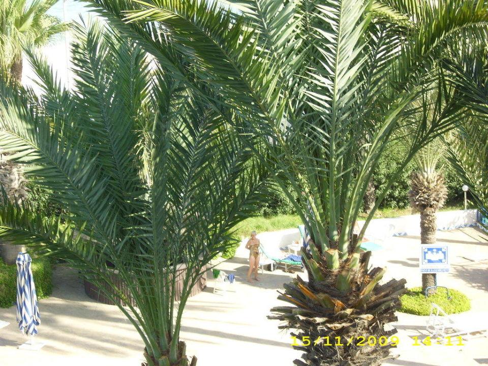 Palmen am Pool Hotel Abou Nawas Nejma  (geschlossen)