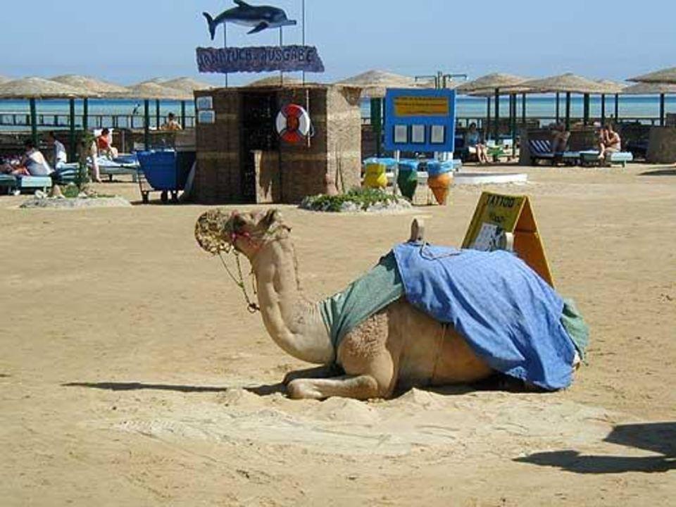 Calimera Hurghada Movie Gate Golden Beach Hurghada
