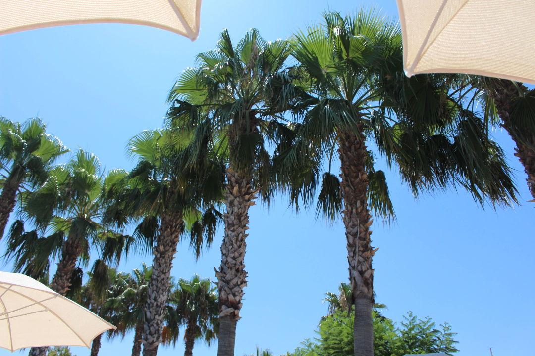 Hotel Trendy Palm Beach Side