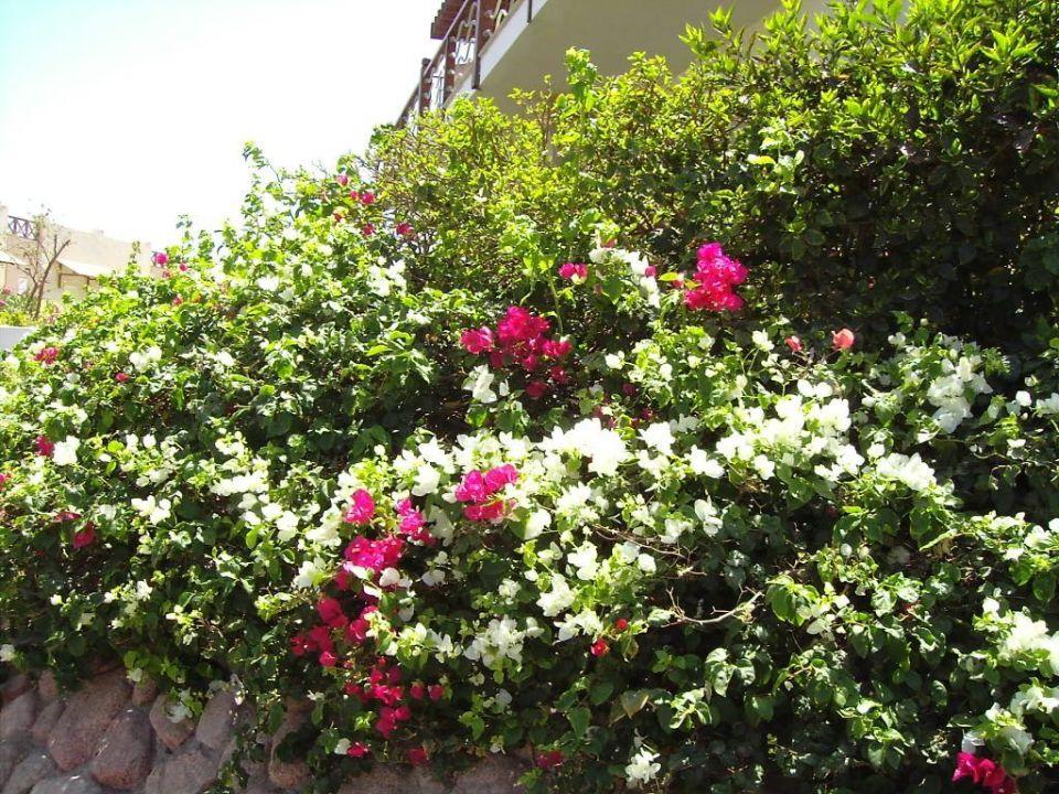 Blumen Concorde El Salam Hotel Sharm el Sheikh