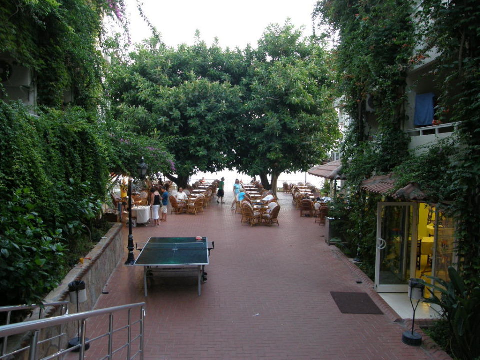 Taras pod fikusami Görgülü Kleopatra Beach Hotel  (Vorgänger-Hotel – existiert nicht mehr)