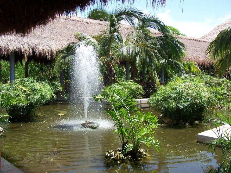 im tropischen Garten IBEROSTAR Hotel Paraiso del Mar