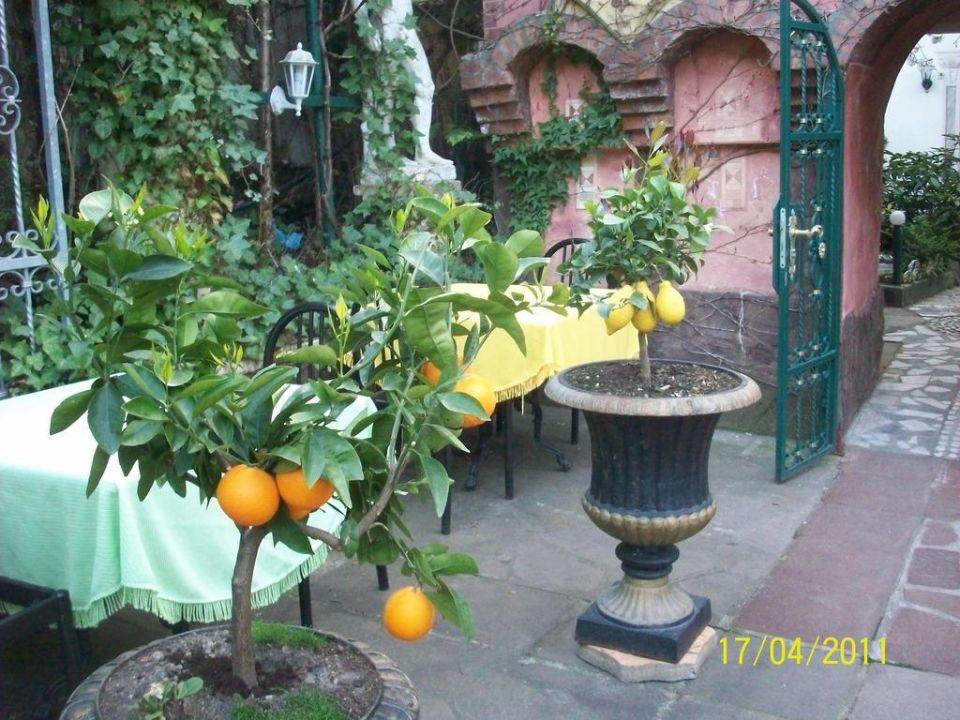 Duft von Zitrusfrüchten Hotel Don Giovanni