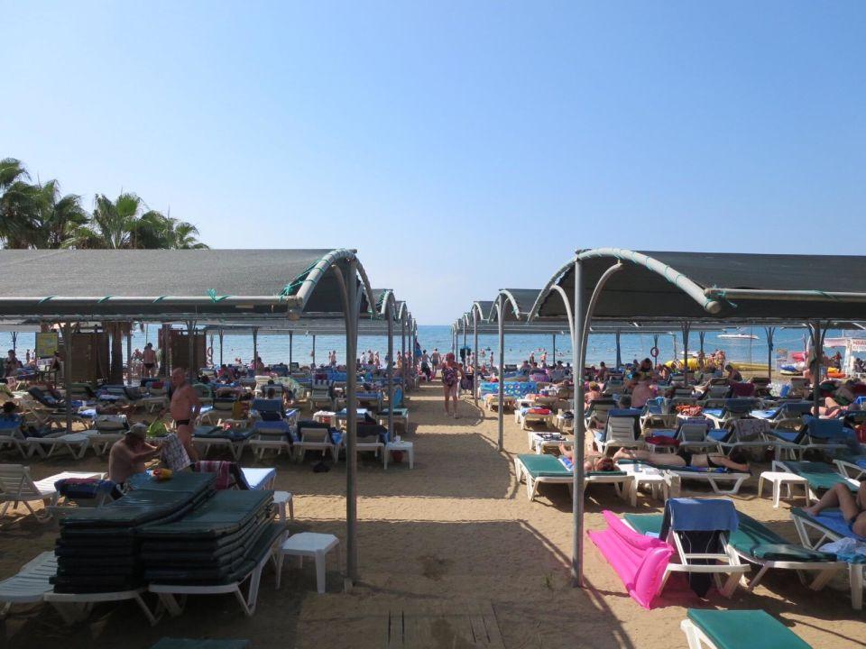 Trendy Palm Beach Hotel Side Holidaycheck