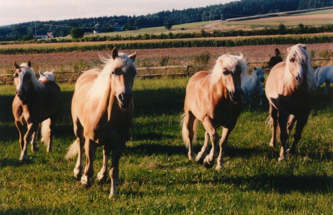 Hoteleigene Pferde Hotel Wolfringmühle