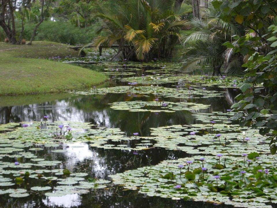 Gartenanlage Hotel Nexus Resort Karambunai