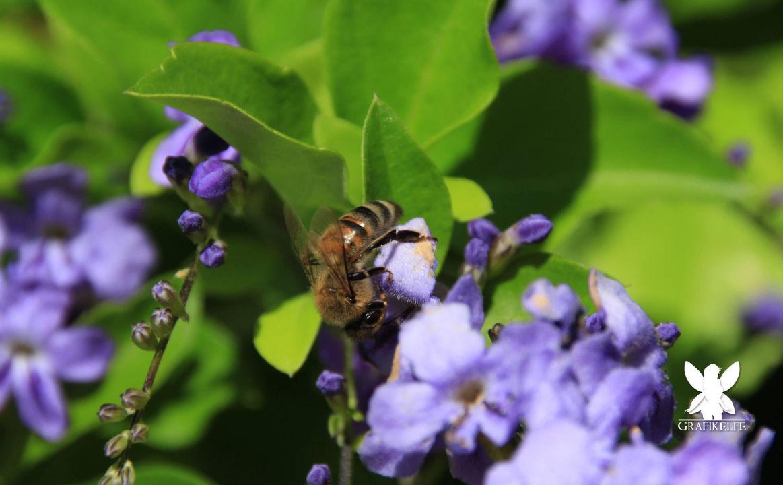 Quot Bienen Und Blumen Quot Nashira Resort Hotel Amp Aqua Spa Side