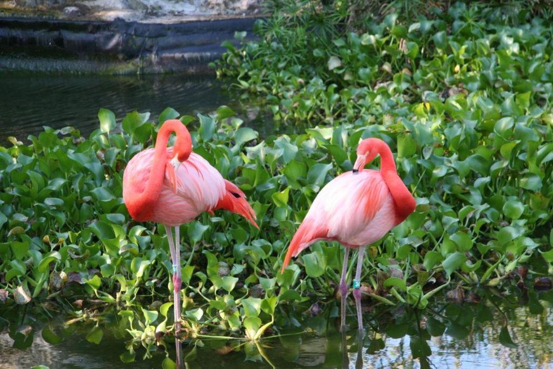 Flamingos Grand Palladium Riviera Resort & Spa