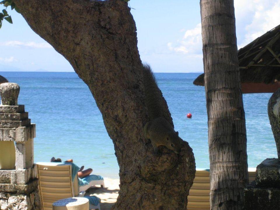 Eichhörnchen und Strand The Westin Resort Nusa Dua, Bali