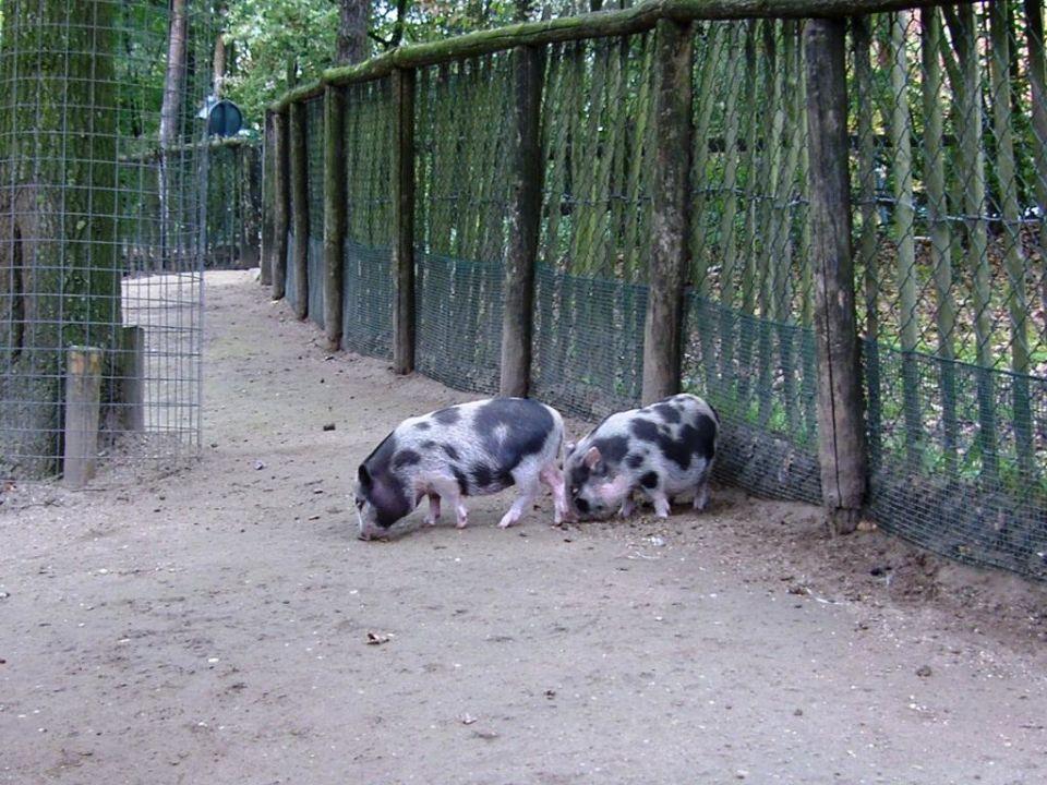 Bauernhof Center Parcs Het Heijderbos