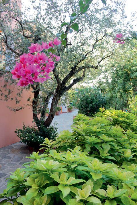 Gartenanlage Club Hotel Torre Moresca