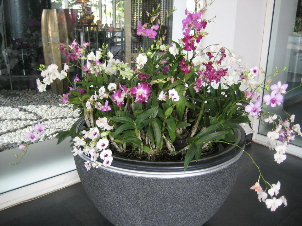 Orchideen Deko Best Western Premier Hotel Amaranth Suvarnabhumi