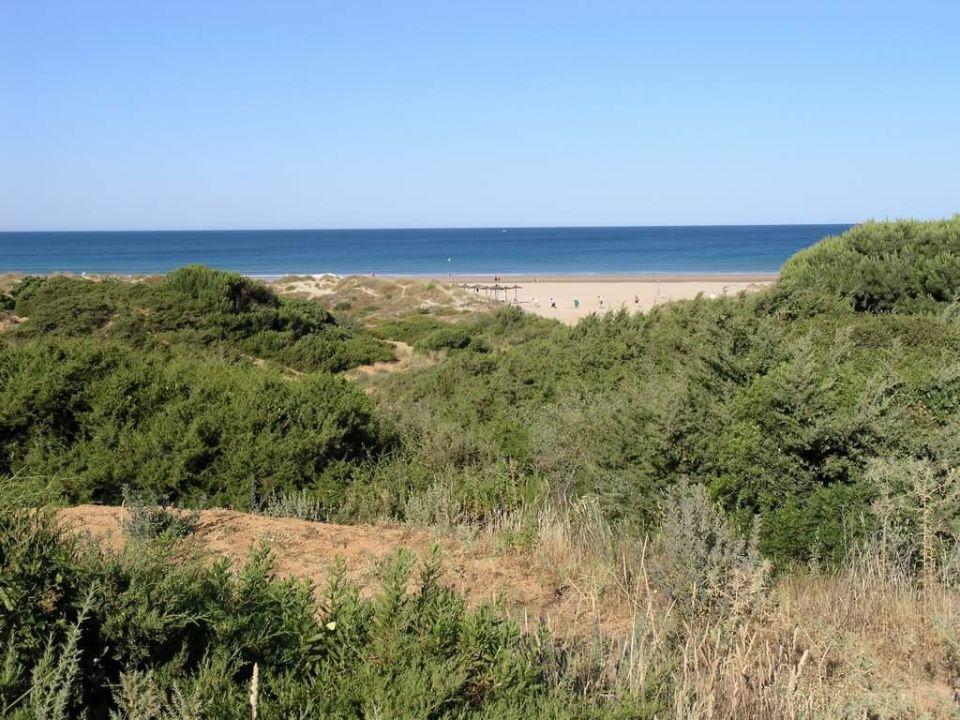 Blick zum Strand Hipotels Barrosa Garden