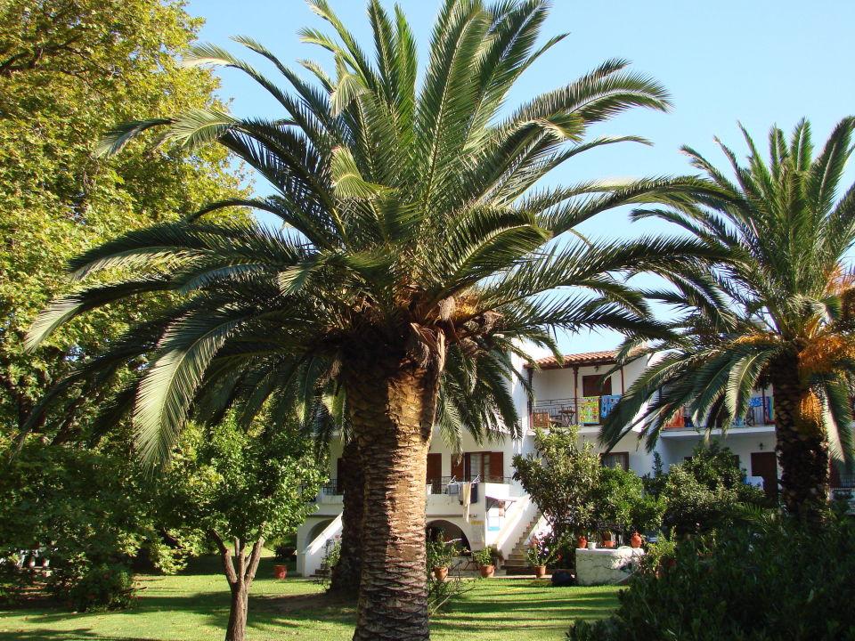 Palma de skiathos Hotel Green Park Skiathos