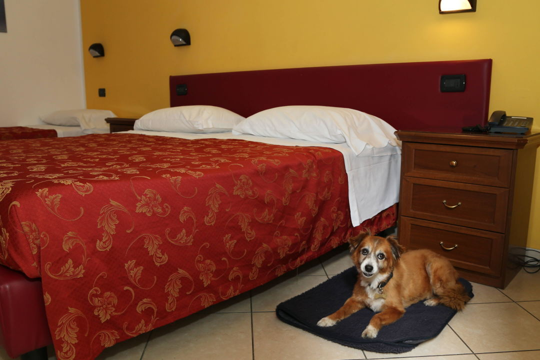 Pet friendly Hotel Hotel ABC