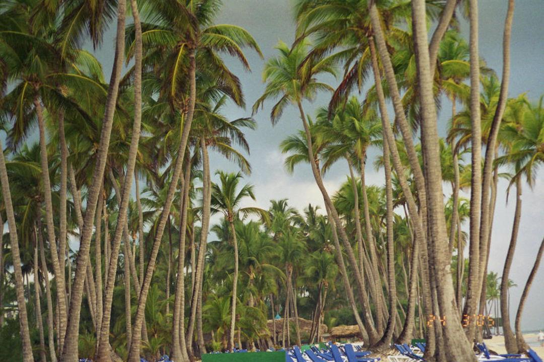 Palmen über Palmen ein Strand mit wirklichem Flair Barcelo Bavaro Beach
