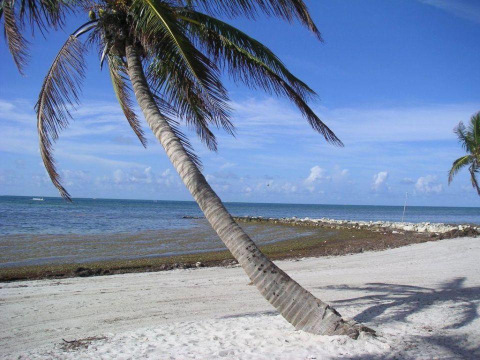 Key West Best Western Hotel Key Ambassador Resort Inn