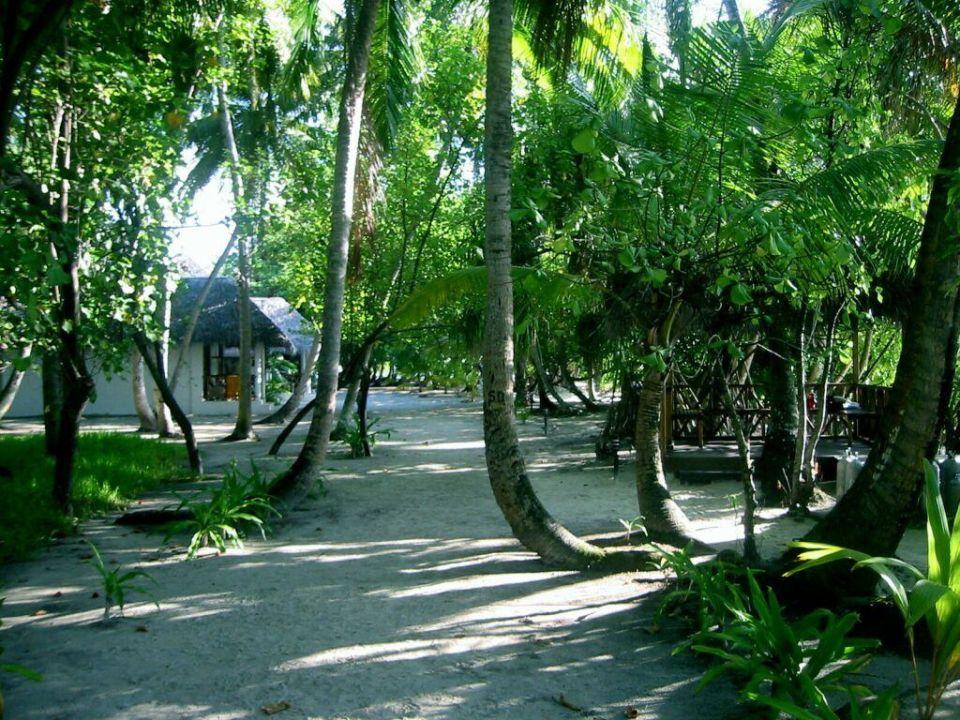 Schmaler Weg zum Deluxe Bungalow Hotel Fihalhohi Island Resort