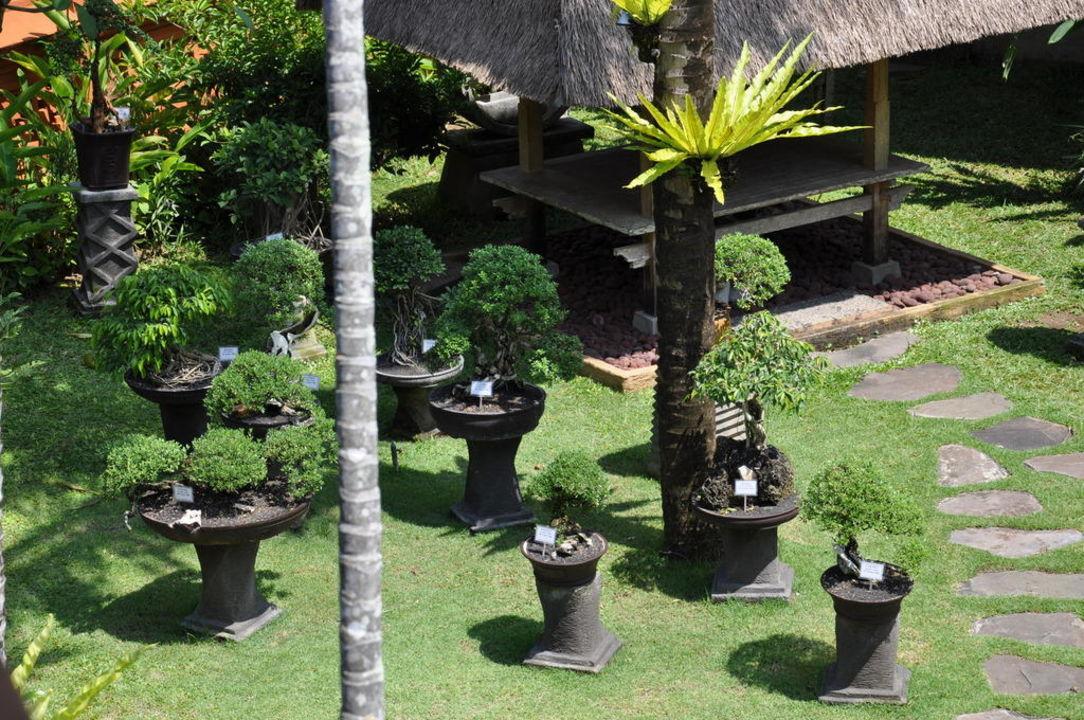 sch ne bonsai b umchen hotel keraton jimbaran resort jimbaran holidaycheck bali indonesien. Black Bedroom Furniture Sets. Home Design Ideas